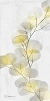 Eucalyptus Sunshine 2 Framed Print