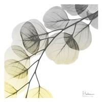 Brilliant Eucalyptus 1 Framed Print