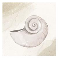 Calming Shell 1 Framed Print