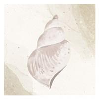 Calming Shell 4 Framed Print