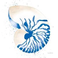 Nautilus Sq Framed Print