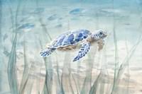 Undersea Turtle Framed Print