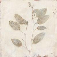 Plantlife II Framed Print
