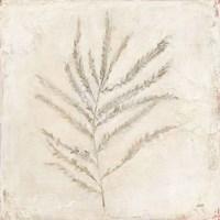 Plantlife I Framed Print