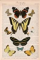American Butterflies I Framed Print