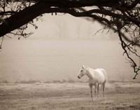 Hazy Horse II Framed Print
