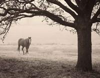 Hazy Horse I Framed Print