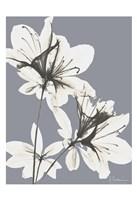Splendid Autumn Beauty 1 Framed Print