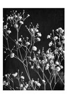 Delicate 2 Framed Print