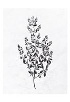 Pressed Herbs 1 Framed Print