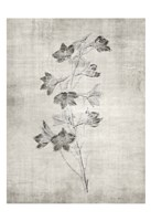 Sepia Botanical 3 Framed Print