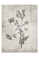 Sepia Botanical 4 Framed Print