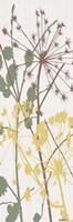 Grasses 3 Framed Print