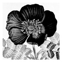 Black and White Bloom 2 Framed Print