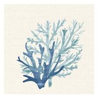Coral Shades 2 Framed Print