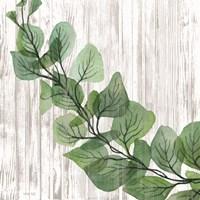 Eucalyptus on White Framed Print