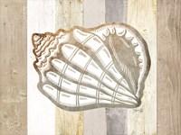 Coastal Shell I Framed Print