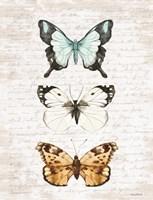 Butterfly Trio Fine Art Print