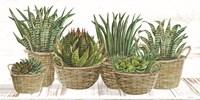 Succulent Baskets Framed Print