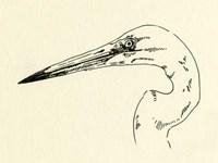 Heron Head II Framed Print