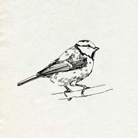 Bird Feeder Friends IV Framed Print
