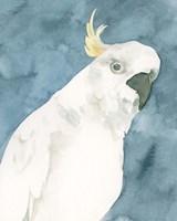Cockatoo Portrait I Framed Print