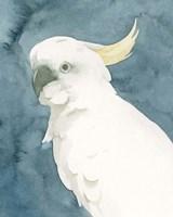 Cockatoo Portrait II Framed Print