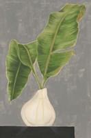Frond in Vase III Framed Print