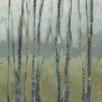 Transitional Treeline I Framed Print