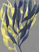 Kelp Embrace II Framed Print