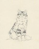 House Cat III Framed Print