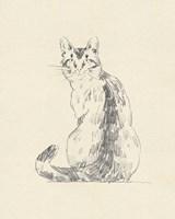House Cat V Framed Print