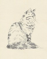 House Cat VI Framed Print