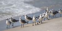 What's Up Gulls Framed Print