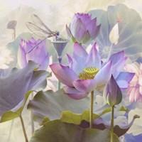 Lotus Sanctuary II Framed Print