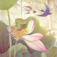 Lotus Sanctuary III Framed Print