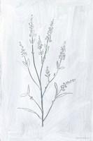 Milkweeds I Framed Print