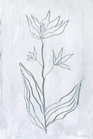 Milkweeds III Framed Print