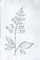 Milkweeds IV Framed Print