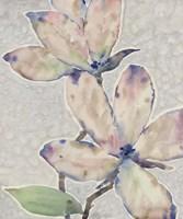 Blossom Study I Framed Print