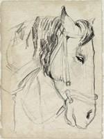 Horse in Bridle Sketch I Framed Print