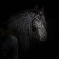 Equine Portrait X Framed Print