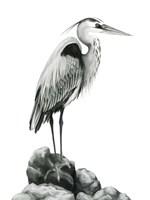 Shoreline Heron in B&W I Framed Print