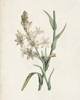 Classic Botanicals I Framed Print