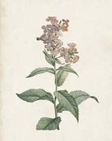 Classic Botanicals II Framed Print
