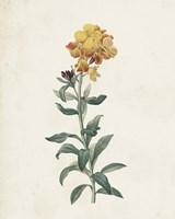 Classic Botanicals III Framed Print