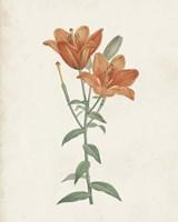 Classic Botanicals V Framed Print