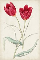 Antique Botanical Collection III Framed Print