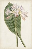 Antique Botanical Collection IV Framed Print