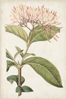 Antique Botanical Collection VI Framed Print